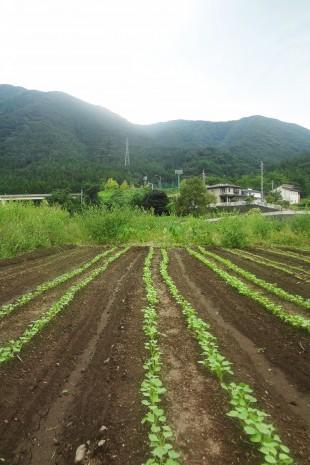 やさい・畑の写真のイメージ